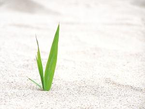 sand-straw-1392579-1280x960